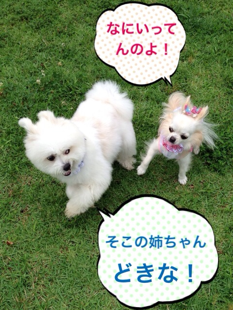 fc2blog_2014072119140477a.jpg