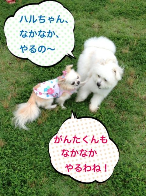 fc2blog_20140722063633eaf.jpg