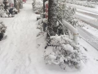 深まる東京の雪 By占いとか魔術とか所蔵画像