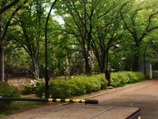 青葉になった東京の桜2 by占いとか魔術とか所蔵画像
