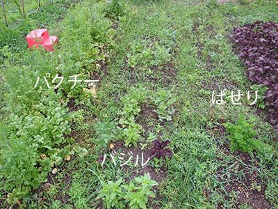 hatakibajiru.jpg