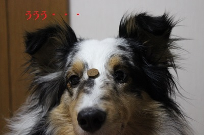あ3266IMG_3266