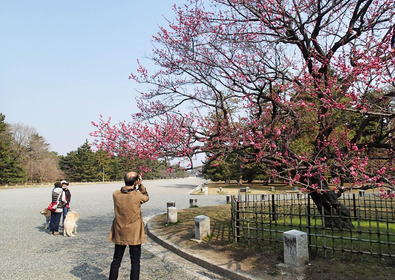 kuroki_805.jpg