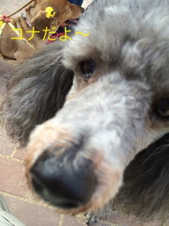fc2blog_20140821200148f10.jpg