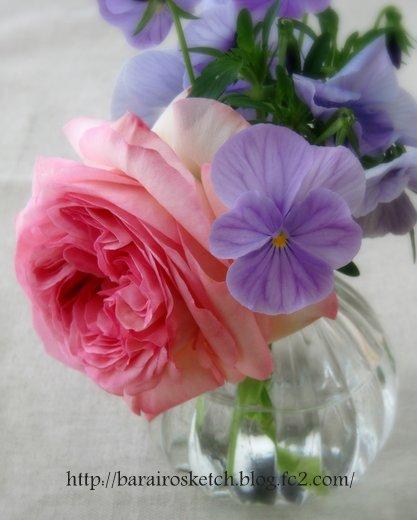 ピエール切り花