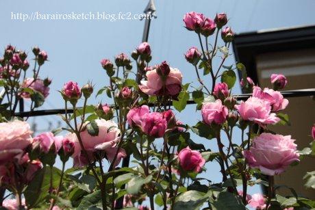 ミサト上開花1