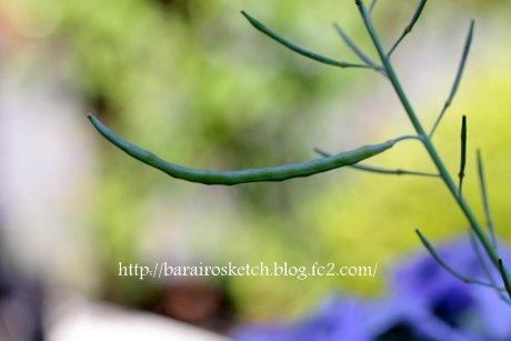 葉ボタンの種