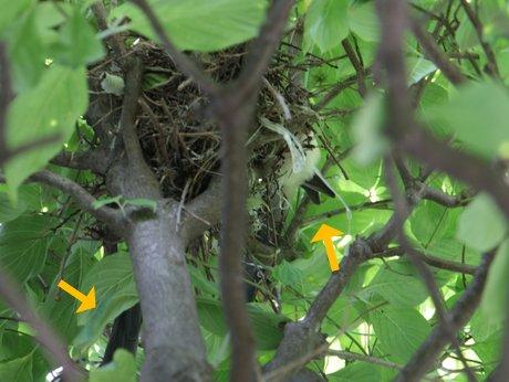 尾長鳥の巣2