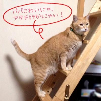 blog10_201406212249283cd.jpg