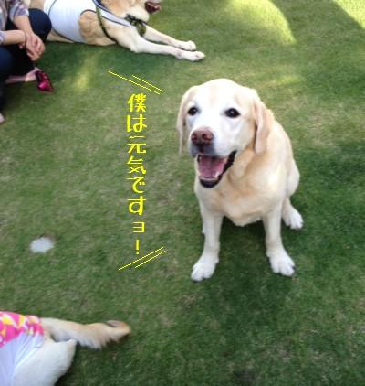 blog5_20140511223508ff1.jpg