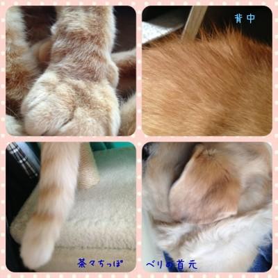 blog6_20140701001734d36.jpg