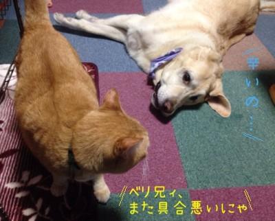 blog9_20140621224834a51.jpg