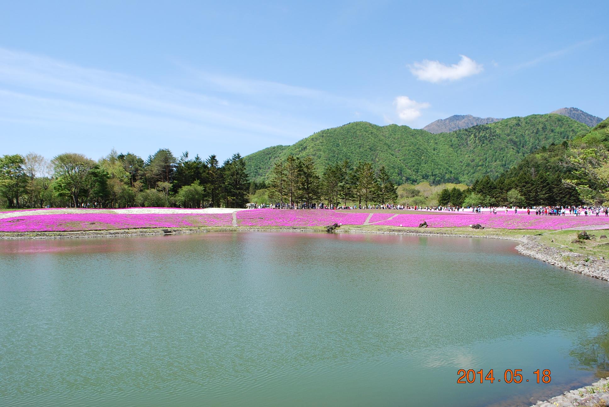 芝桜祭り会場