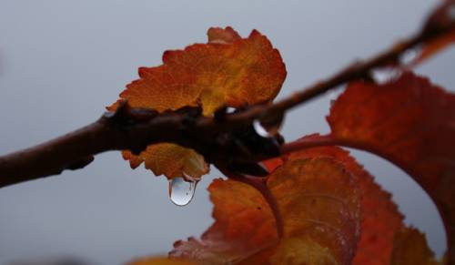 automne4.jpg