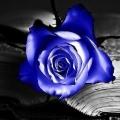 sarah bleu