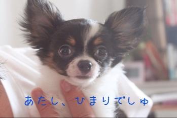 fc2blog_2014071918062481a.jpg