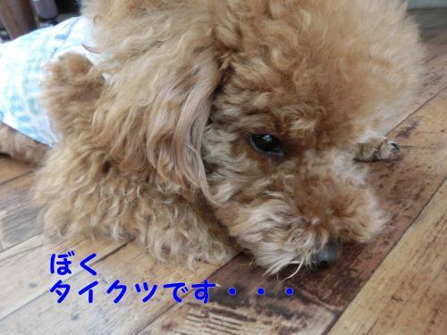 CIMG6487_convert_20140530234153.jpg