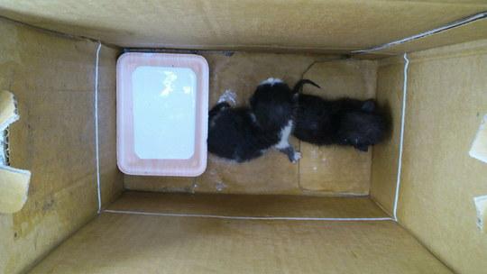 1-1-2011090909370000-001.jpg