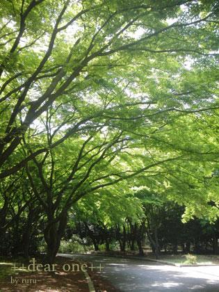 春の公園140422_7