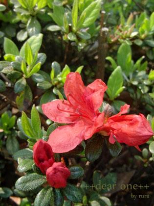 春の色集め140423_3