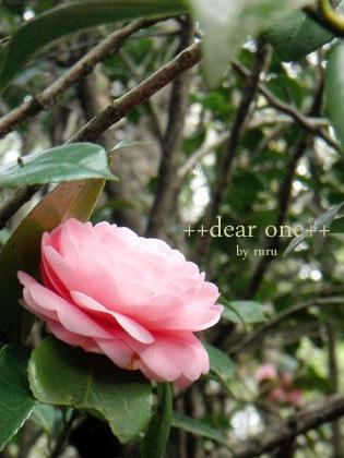 春の色集め140423_7