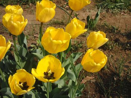 春の色集め140424_1