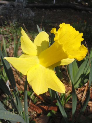 春の色集め140424_5