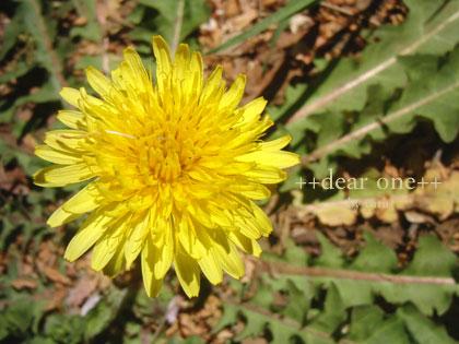 春の色集め140424_6