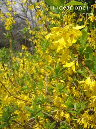 春の色集め140424_7