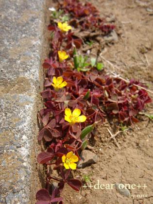 春の色集め140424_8