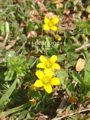 春の色集め140424_9
