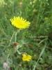 春の色集め#2/黄色
