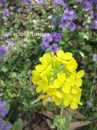 春の色集め140424_11