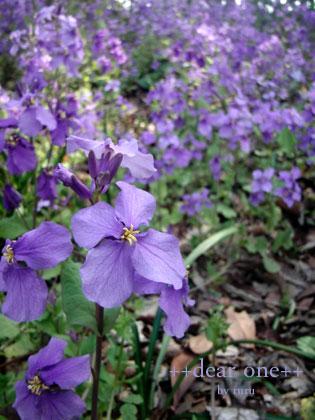 春の色集め140427_7