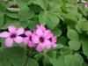 春の色集め#5/赤紫