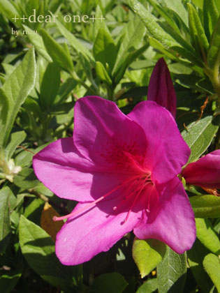 春の色集め140428_5