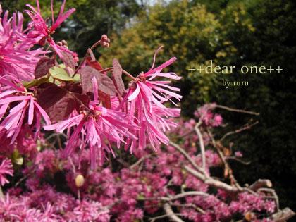 春の色集め140428_7