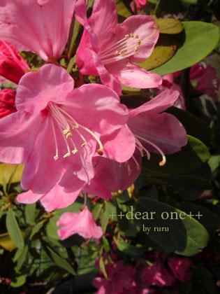春の色集め140428_9