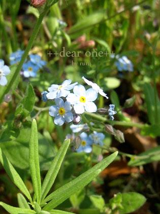 春の色集め140427_15