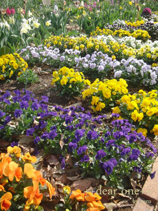 春の色140430_3