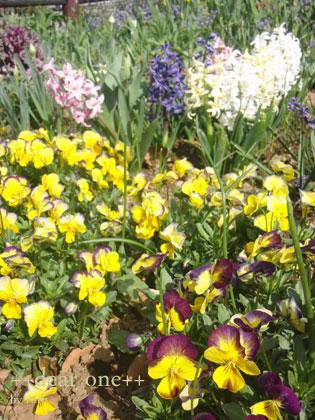 春の色140430_4