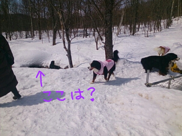 fc2_2014-03-22_20-23-58-208.jpg