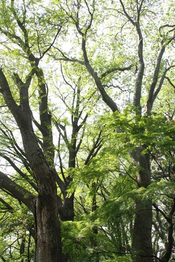 14森の新緑