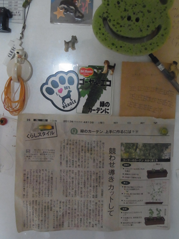 冷蔵庫のゴーヤコーナー