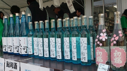 26鮎河桜5