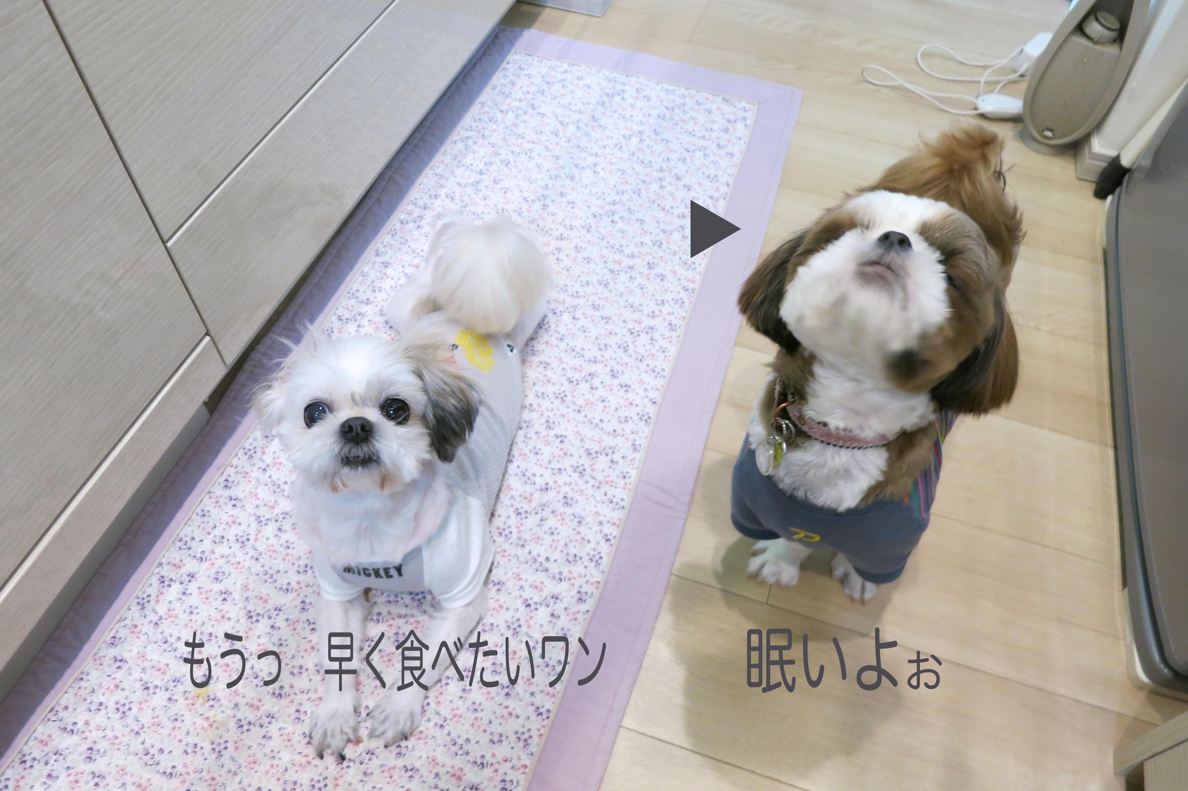 HANA_MIKU__2.jpg