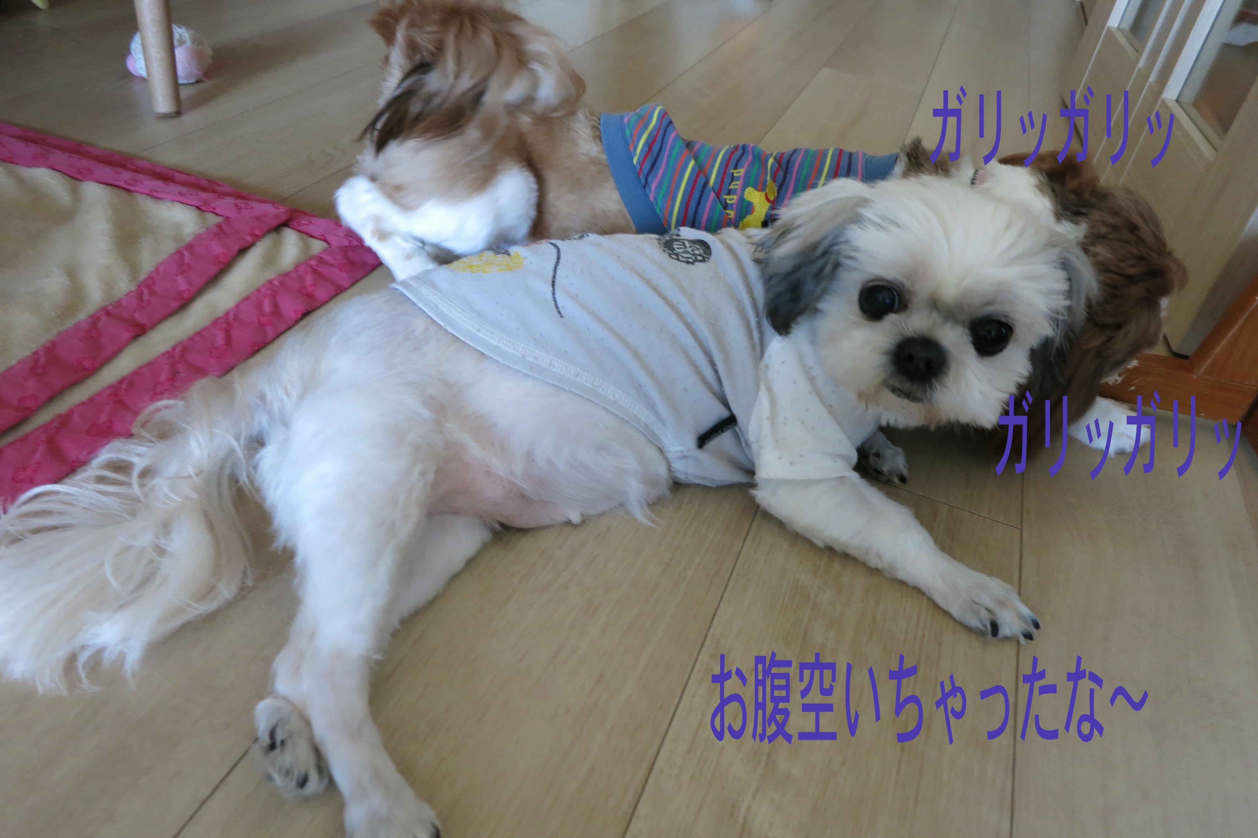 miku_0_.jpg