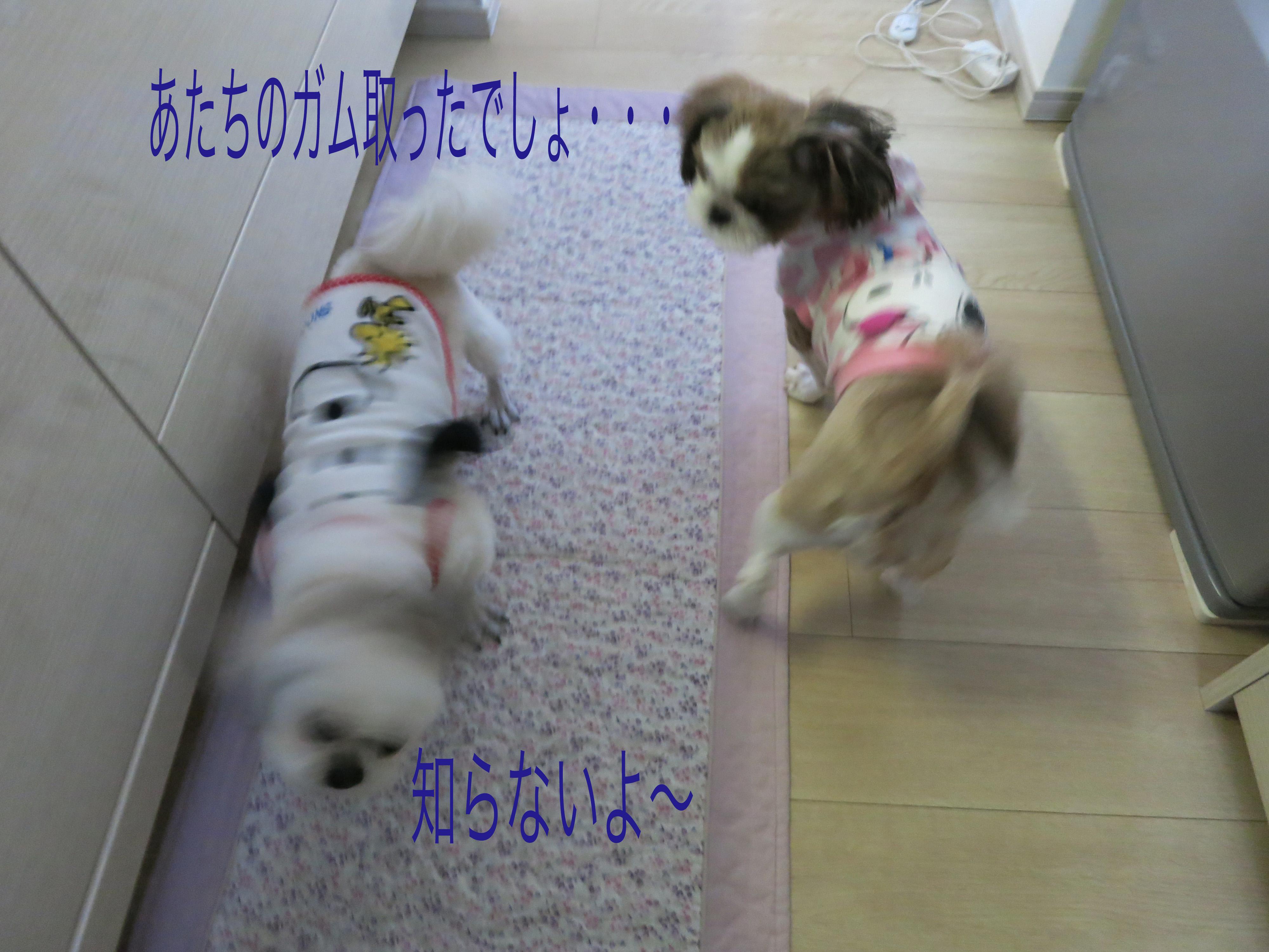 mikuhana2_1268.jpg