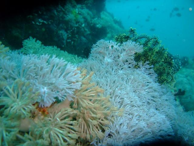 セブの海中3