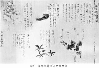 「七湯の枝折」産物の図2